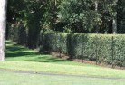 Ashbourne VIC Wire fencing 15